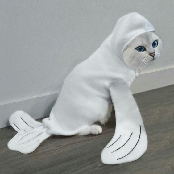 19 White Cat Meme11 Quoteshumor Com