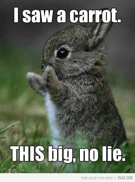 funny bunny . 25 Best Funny animal Quotes and Funny Memes - Funny Memes | Funny memes for kids