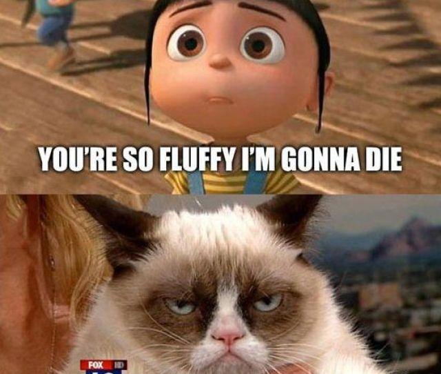 Top  Most Funniest Grumpy Cat Pics Funnies