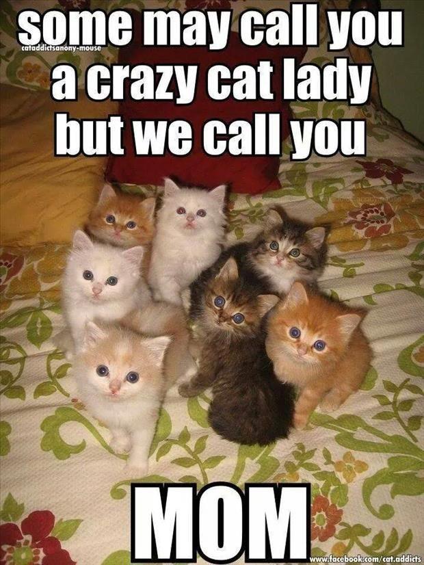 Top 30 Funny Cat Memes #Funny Meme