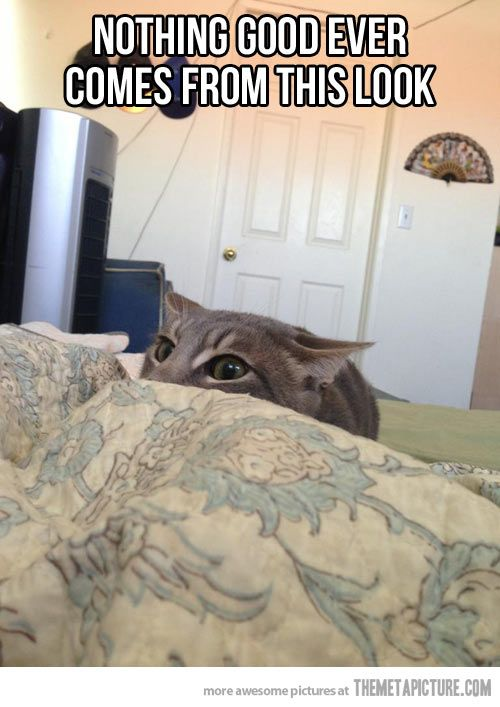 Top 30 Funny Cat Memes #Funny images