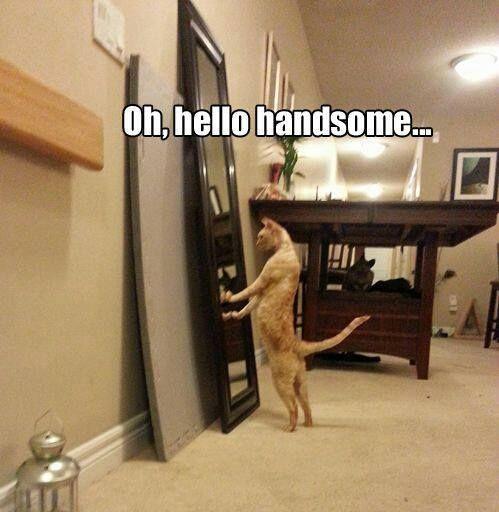 Top 30 Funny Cat Memes #Funny kittens