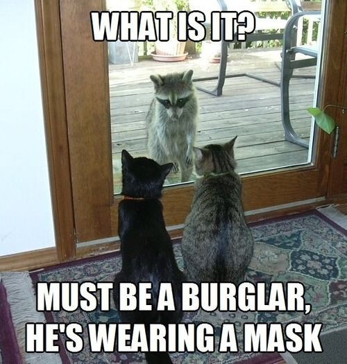 Top 30 Funny Cat Memes #Humor jokes