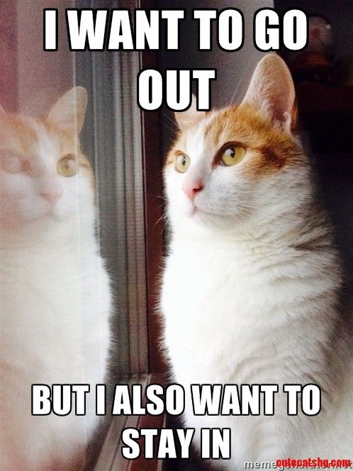 Top 30 Funny Cat Memes #Humor quotes