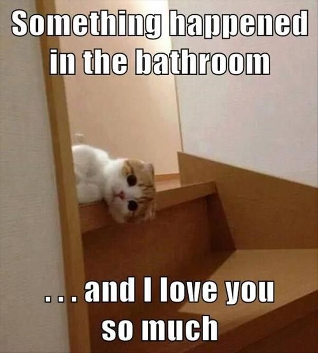 Top 30 Funny Cat Memes #Humorous