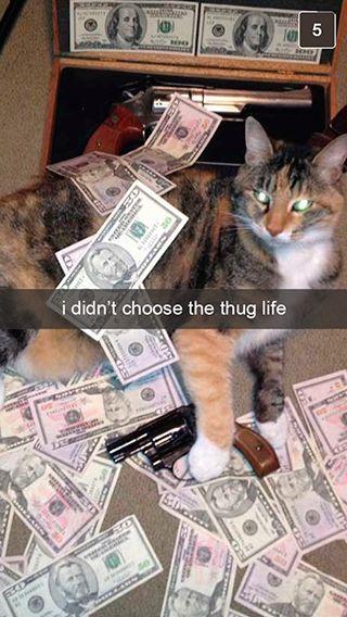 Top 30 Funny Cat Memes #kittens