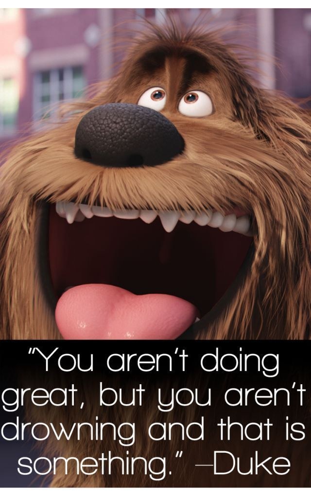 The Secret Life Of Pets Quotes Top Movie Quotes Enzasbargains