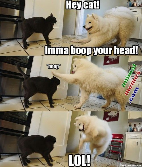 Most Funny Quotes Funny Animal Memes Best 113 Funny Animal Memes Quotesviral Net Your Number One Source For Daily Quotes