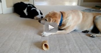dog steals bone