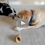 Dog Steals Sad Puppy's Bone, Doesn't Even Want It (Video)