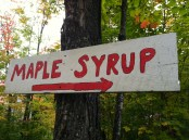 Maple syrup, deep in the Sawtooth Mountains