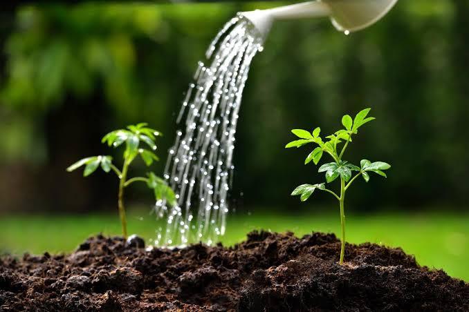 بحث علاقة الماء بالتربة والنبات