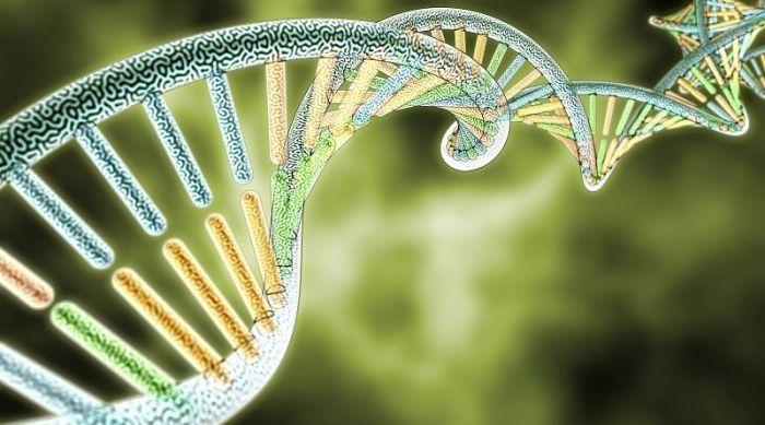 Клонирование или естественное размножение