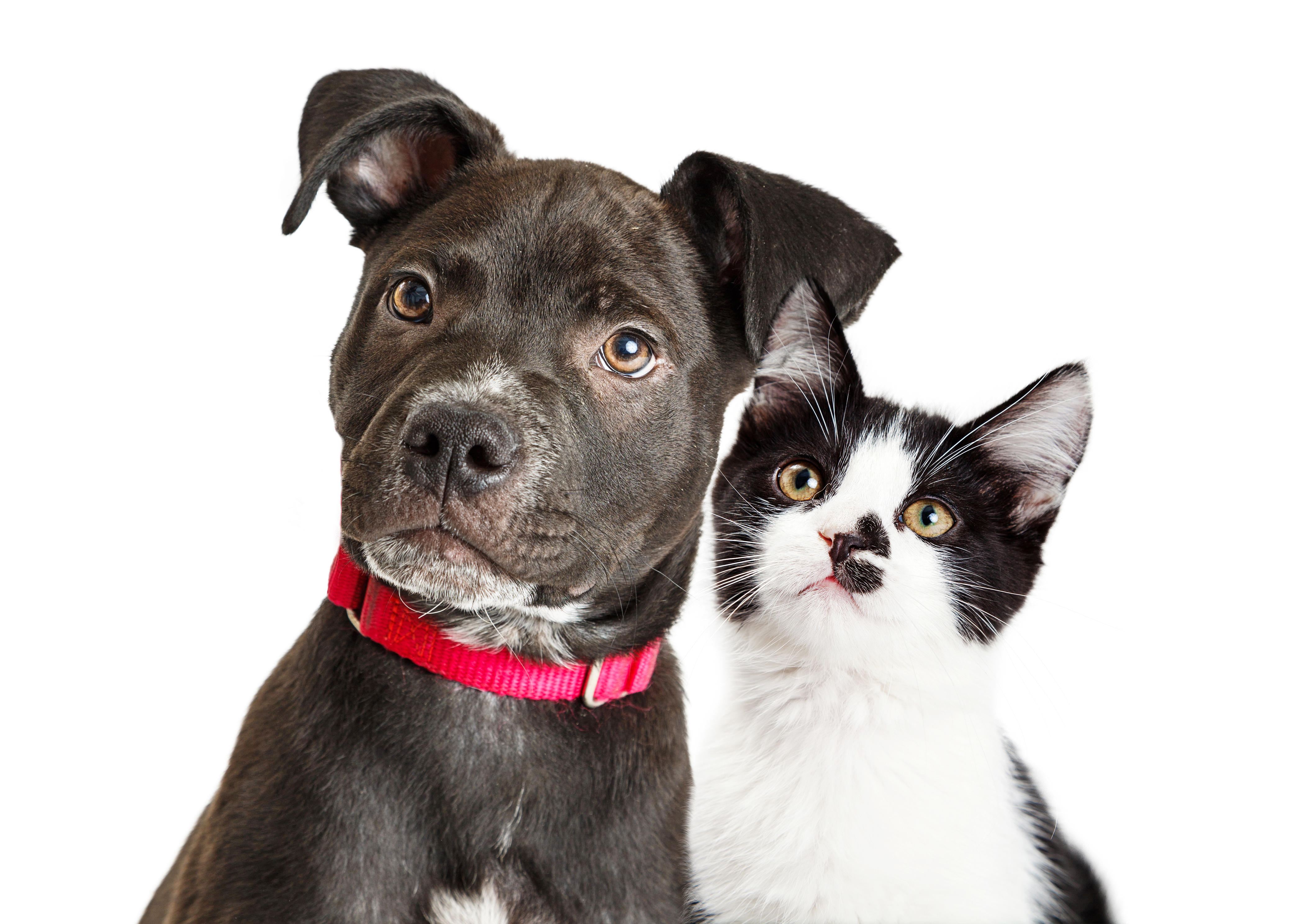 7 Tips For Adopting The Perfect Dog Or Cat For You