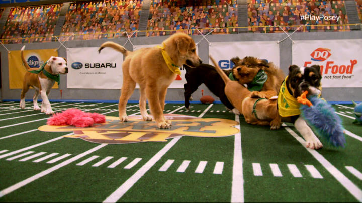 Image result for puppy bowl 2017