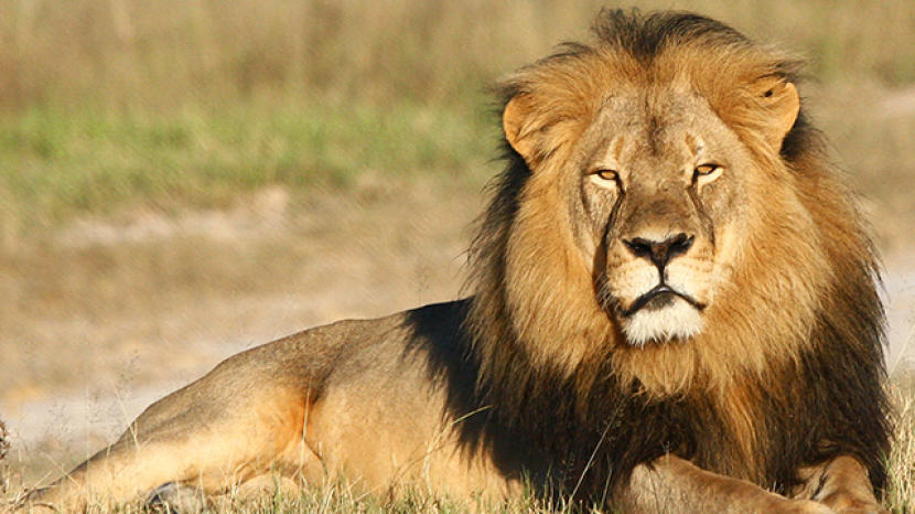 Image of: Wild Animals Wild Animals Animal Planet Wild Animals Animal Planet