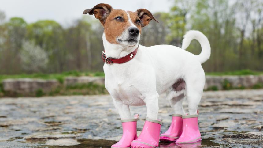 6 Rain Boots for April Showers