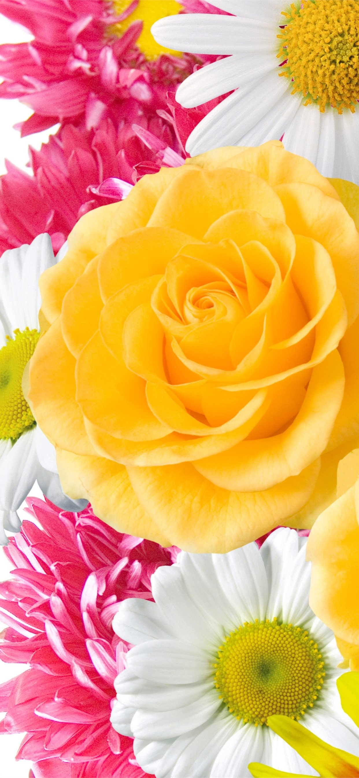 Yellow Flowers High Quality Resolution Gt Yodobi Iphone 11 Wallpapers Free Download