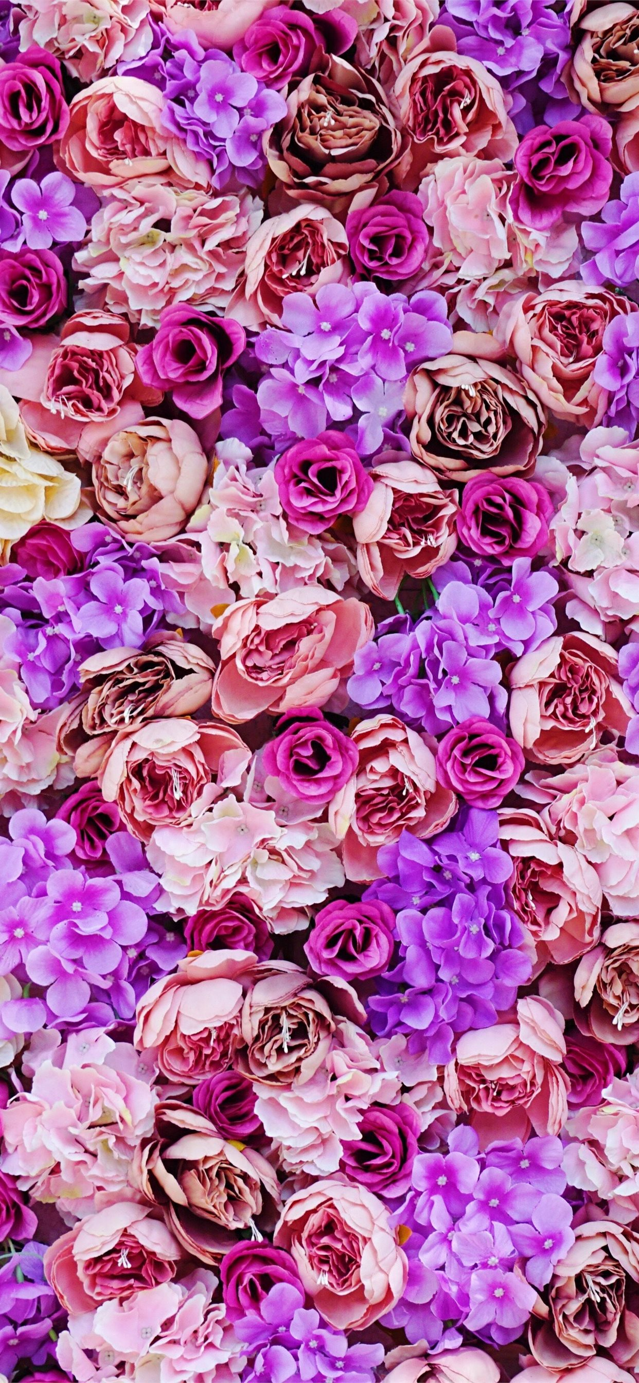 Pink And Purple Petaled Flower Iphone 11 Wallpapers Free Download