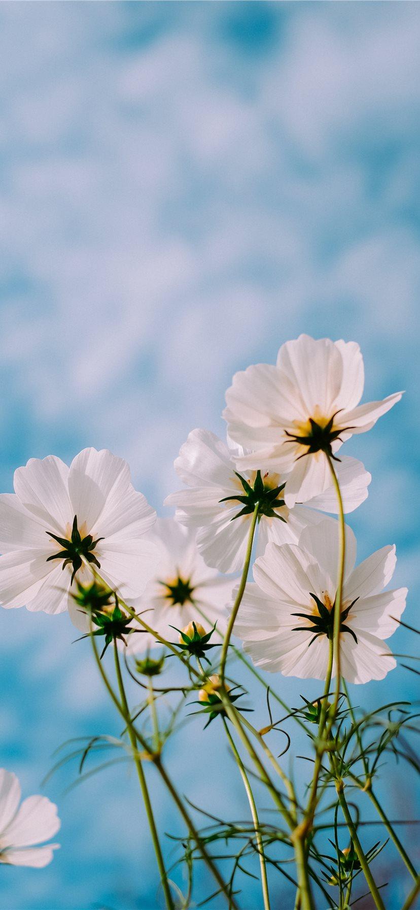 Best Flower Iphone 11 Wallpapers Hd 2020 Ilikewallpaper