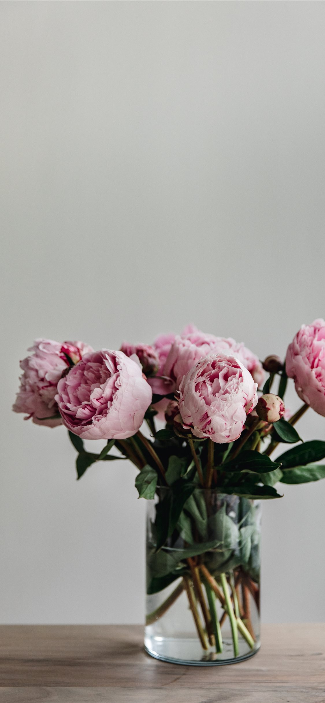 This Simple Image Of A Bunch Of Peonies In A Vase Iphone X Wallpapers Free Download