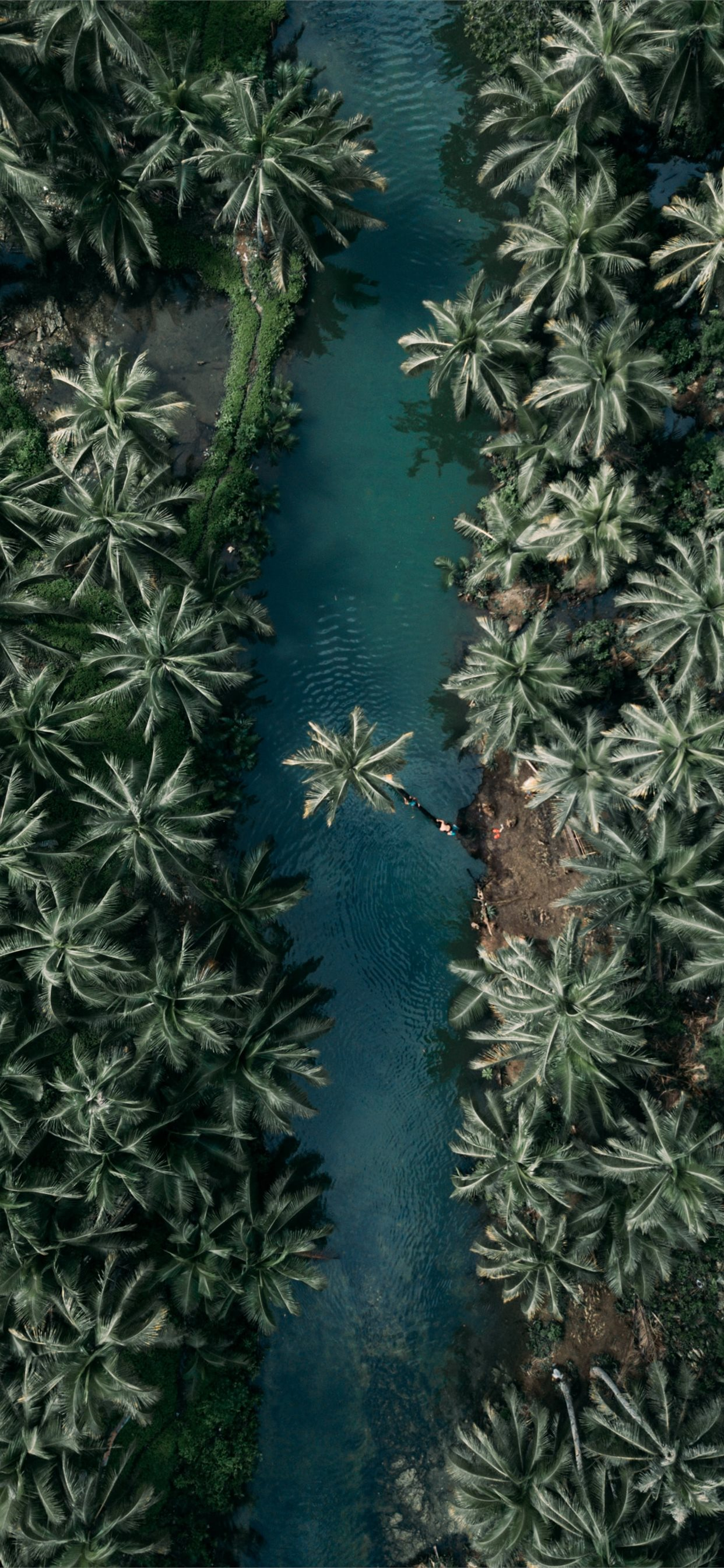 Top View Of Palm Trees Iphone X Wallpapers Free Download