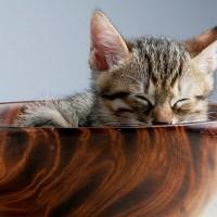 超かわいい子猫ちゃんたちのGIF画像 Part 2
