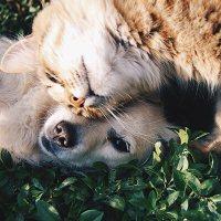 心がほっこりするイヌ、ネコのGIF画像