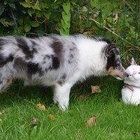 犬・猫・動物の面白いGIF画像まとめ