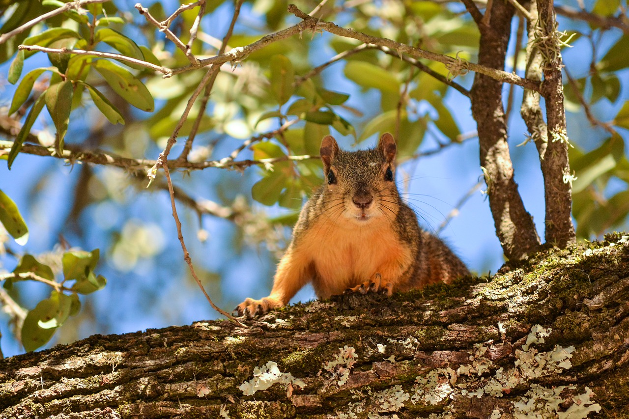 What Trees And Squirrels Have To Teach Us About Parenthood