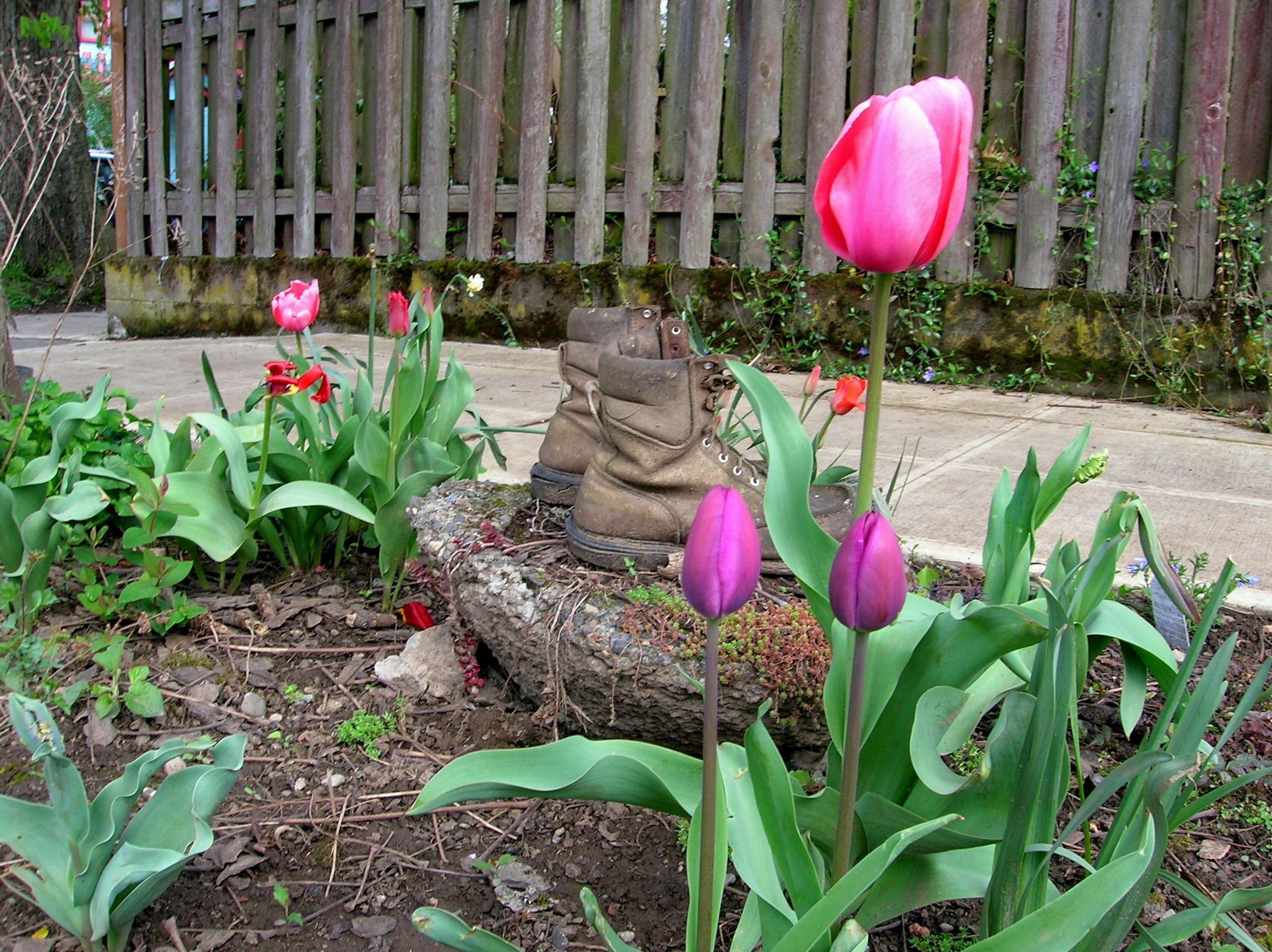 tulip-boots