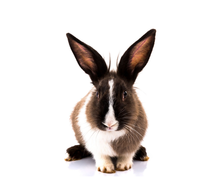 About Rabbit Food webpage
