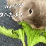 セロリの葉っぱを食べるルビー