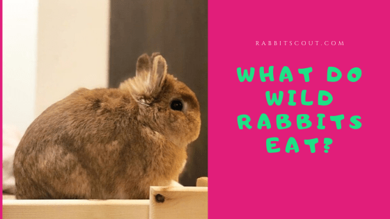 What Do Wild Rabbits Eat Your House Rabbits Regular Food Can Be Deadly For Wild Rabbits