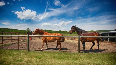 feature-calgary-real-estate-exterior-ranch-horses