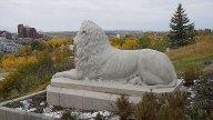 calgary-icons-lion-profile