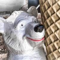 The Smile Of The Polar Bear