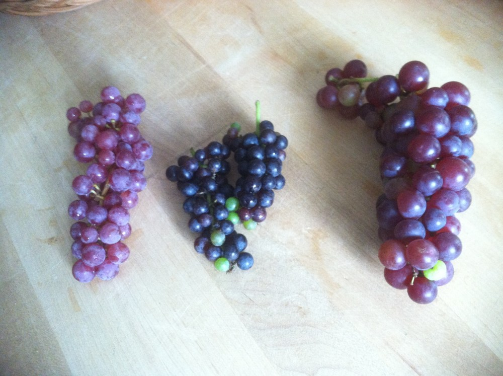 Fruits of Our Labor (4/5)