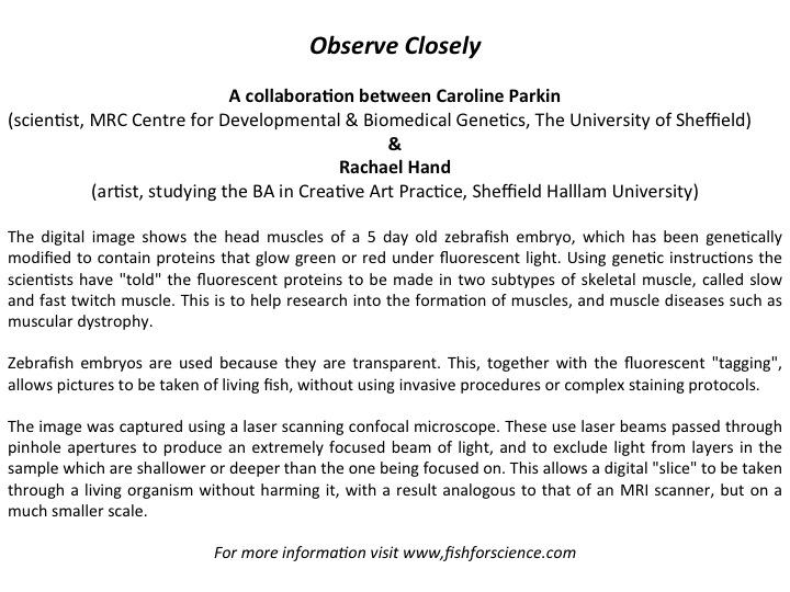 Observe_Closely_text