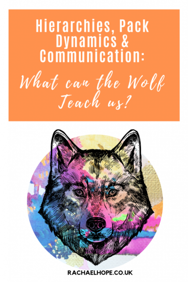 Within this post we will delve into the world of the wolf. The wolf pack is unashamedly hierarchical. From the Alpha to the Omega, EVERY wolf has an individual part to play within the pack. The wolf and the human are both social creatures. But what can these beautiful beasts teach us about our own social and work based standing? #SelfDevelopment #Leadership #TrueAlpha