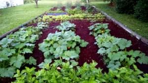 Our garden in June