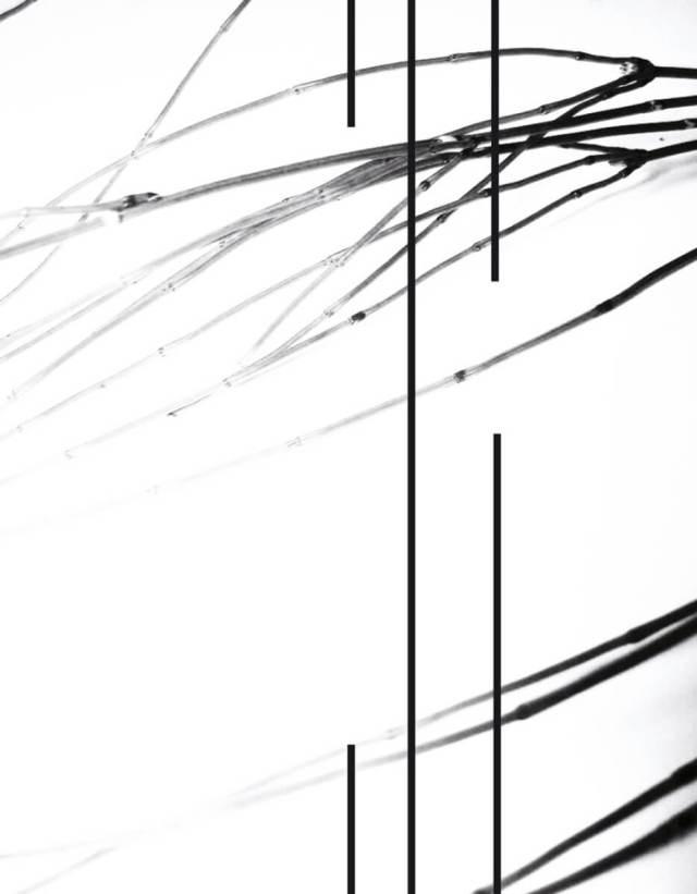 rachela abbate Equisetum-3_herbarium-series-by-Rachela-Abbate herbarium