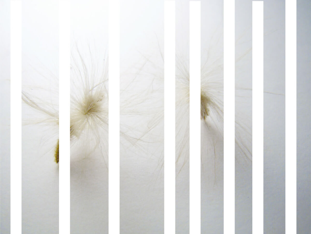 oleander-_2_-herbarium-series-by-Rachela-Abbate