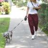 Rachel Bilson a spasso col cane 08-07-2019