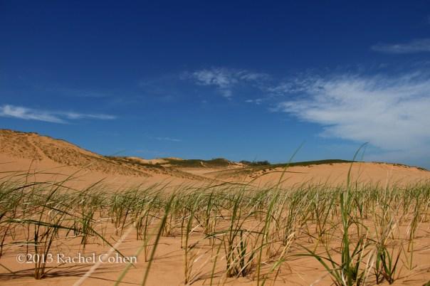 -On Grassy Dunes-