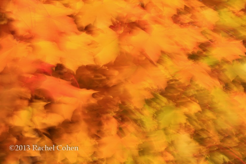 """Autumn Spectacle"""