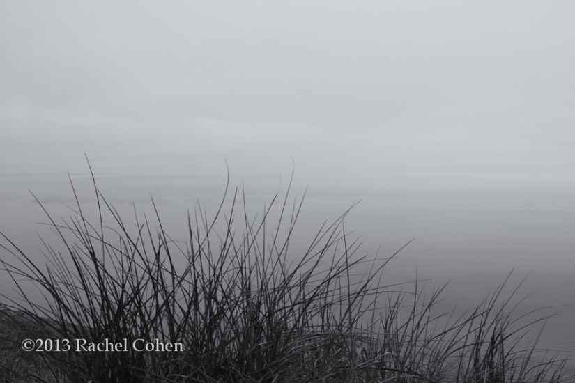 A misty and moody feel, through grasses on the shore!