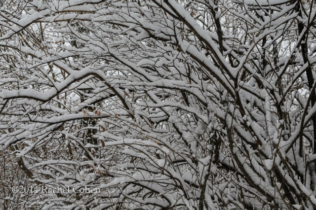 """""""Winter's Weight"""" Snow laden tree branches form a perfect abstract in nature! Winter still hangs on here, but with the arrival of spring this week (LOL) I'm hoping to see some real melting going on! :)"""