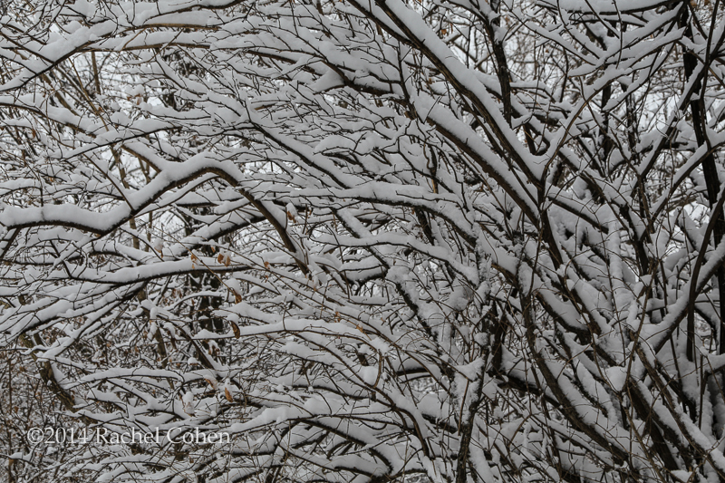 """Winter's Weight"" Snow laden tree branches form a perfect abstract in nature! Winter still hangs on here, but with the arrival of spring this week (LOL) I'm hoping to see some real melting going on! :)"