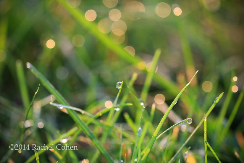 """Sparkling Morning Dew"""